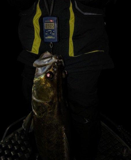Метровый судак был пойман в Тольятти