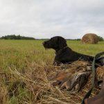 Охотники мешают жителям Самары