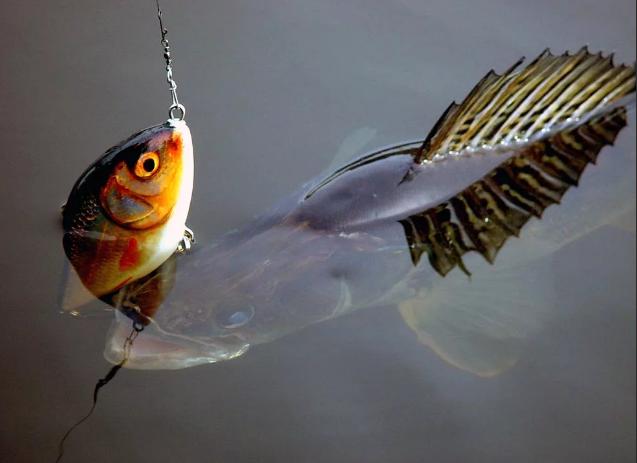 Пропавшего рыбака из Астрахани обнаружили мертвым