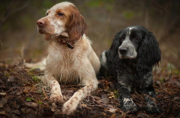 У охотника украли охотничью собаку прямо в лесу