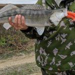 Ужасы астраханской рыбалки
