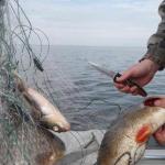За браконьерство на Псковском озере мужчины получили условное лишение свободы