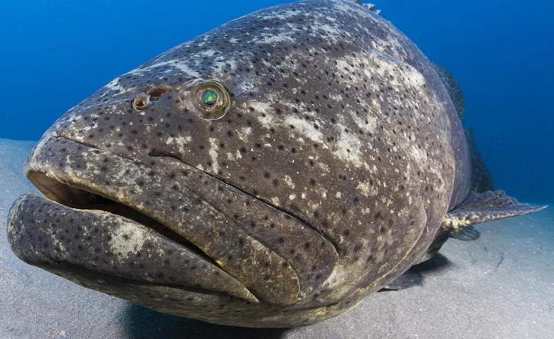 Зловещая 30-ка самые опасные рыбы Мира
