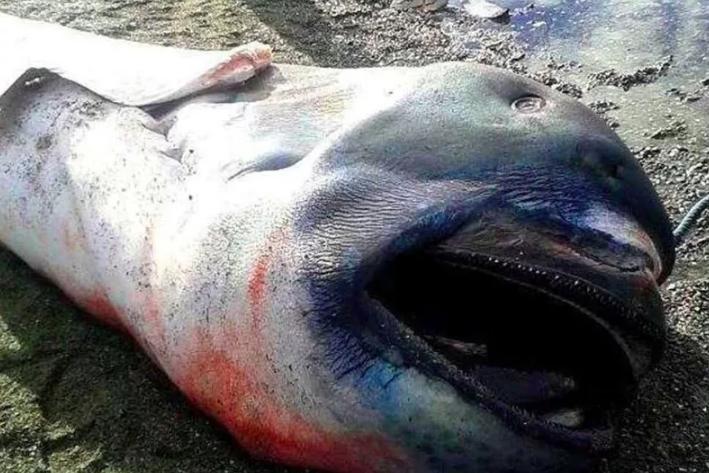 12 монстров, которых выбросило из себя море