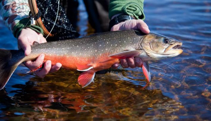 500 000 рублей за одного лосося