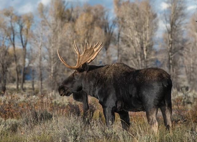 8 мешков сполна набитые мясом лося обнаружили в лесу