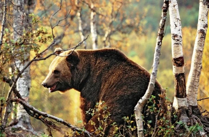 Медведь в Приморье напал на человека