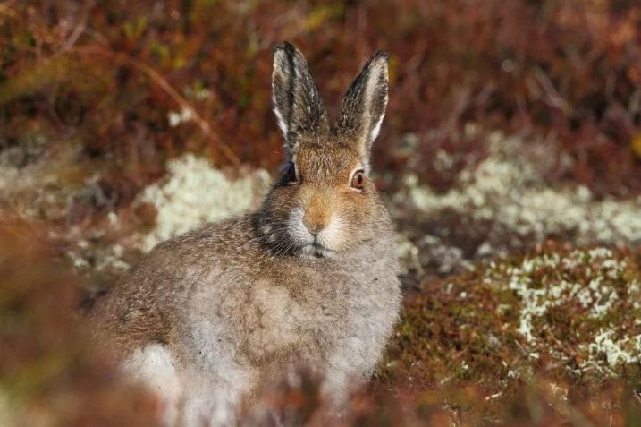 Охота на лис и зайцев начнется на Алтае