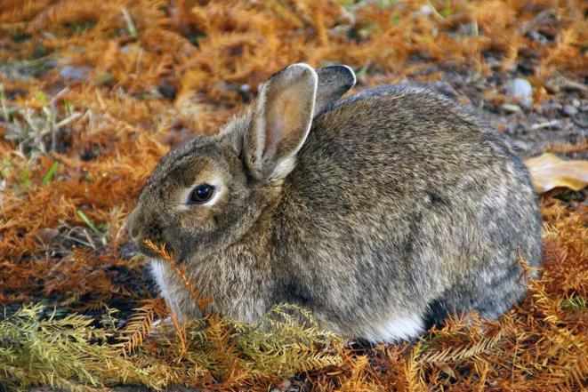 Охотник из Подмосковья охотился на астраханских зайцев из автомобиля