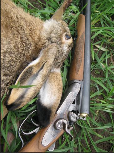 Охотник пугал зайцев с помощью фар автомобиля