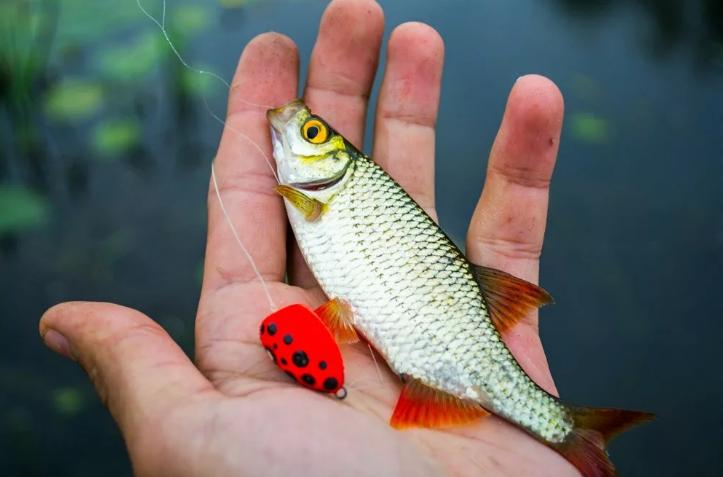 Попла поппер для активной рыбалки: новая наживка в арсенале рыбака