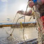 Самарских браконьеров поймали с поличным за ловлей рыбы