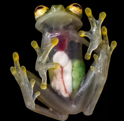 Самые удивительные прозрачные существа Мира