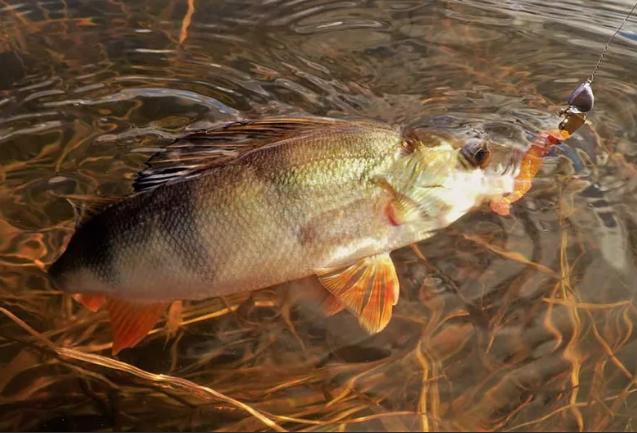 Ужесточение норм вылова рыбы для любителей рыбалки