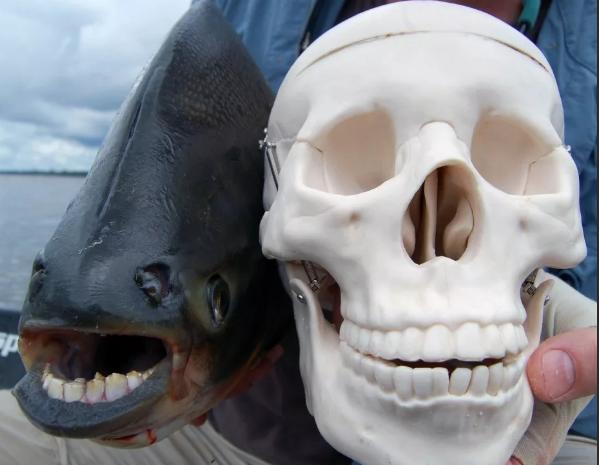 В воронежских водах выловили рыбу с челюстью, как у человека