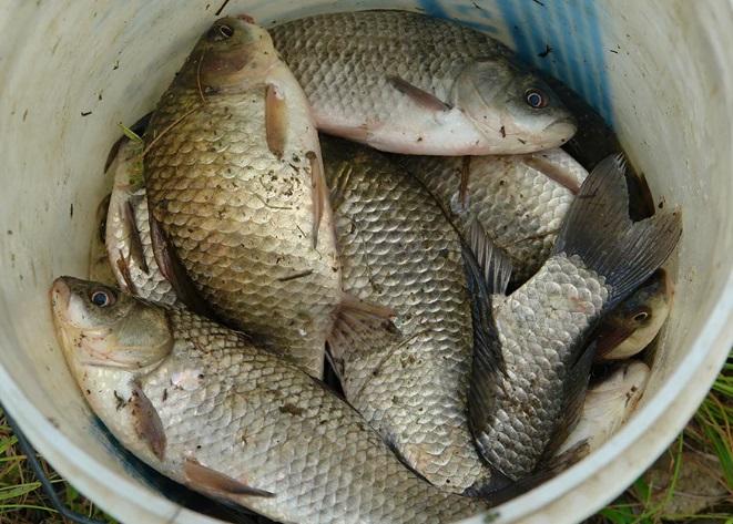 12 пойманных карасей – это два года жизни для рыбака