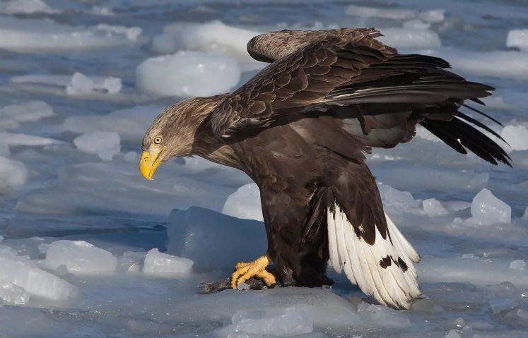 Редких птиц обнаружили на Южном Урале