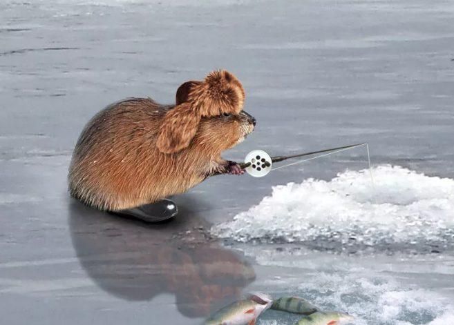 Смешная рыбалка или фото от рыбаков с наступившего сезона