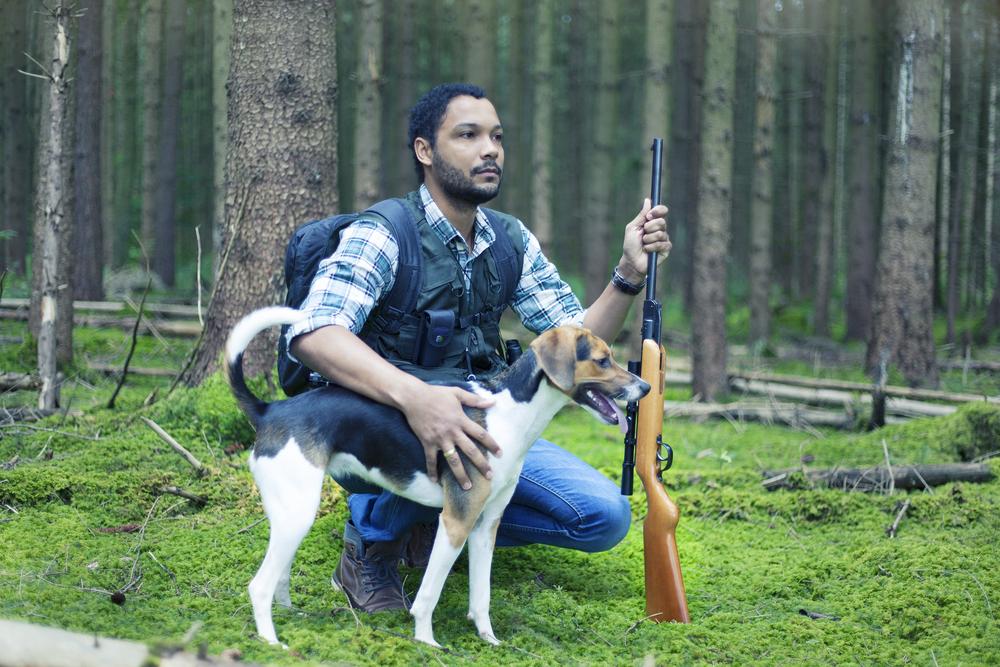 Советы бывалых по охоте на лису