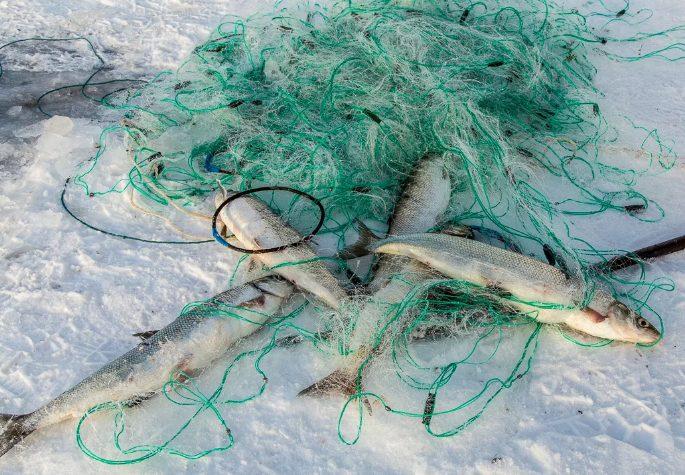 Задержан браконьер с сетями, а также с 17 рыбами