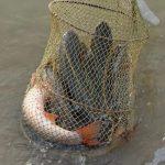 Браконьеры выловили рыбы на 450 000 рублей