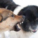 Диких собак в Самаре уже не готовы отстреливать, несмотря на все заявления