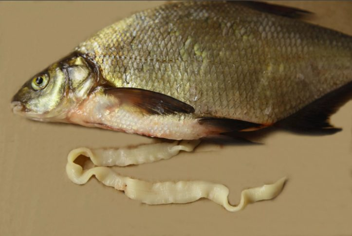 Короновирус из Китая – чем болеет рыба в нашем водоеме