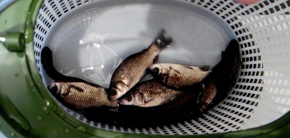 Лайфхак рыбака 5 хитростей для зимней рыбалки