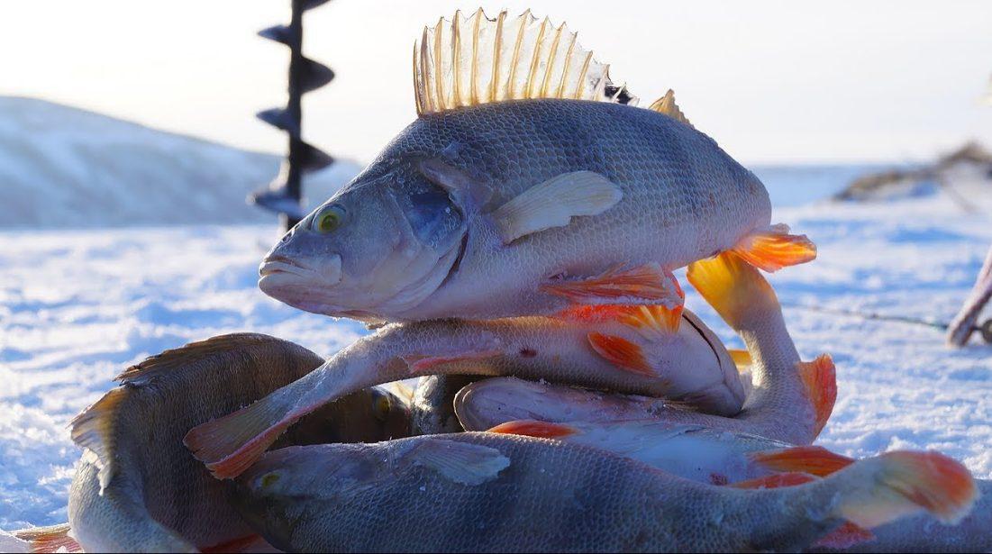 Лайфхак рыбака: 5 хитростей для зимней рыбалки