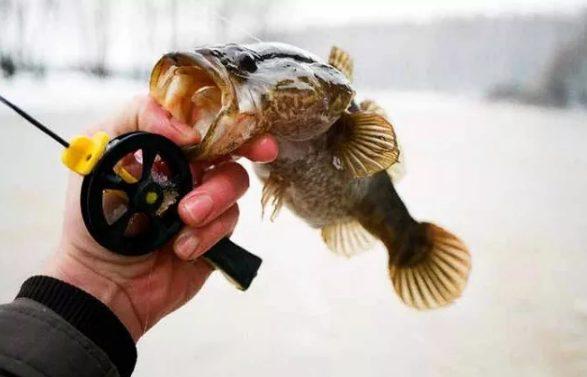 Мясная насадка для ротана. Ловим рыбу зимой