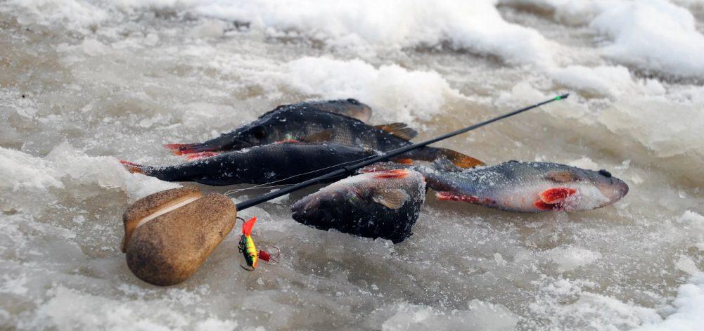 Насадка, которая не подведет рыбака в глухозимье