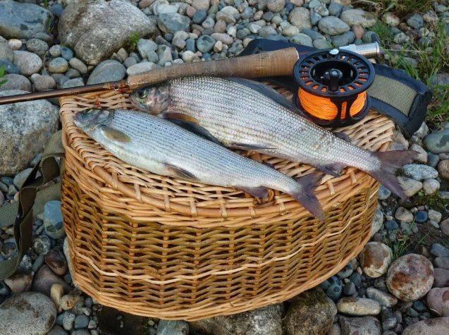 Рыбак поймал хариуса, за что получил 2 года заключения