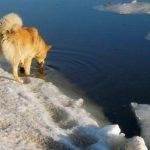 Рыбаки из Рязани спасли пса, тонущего в полынье