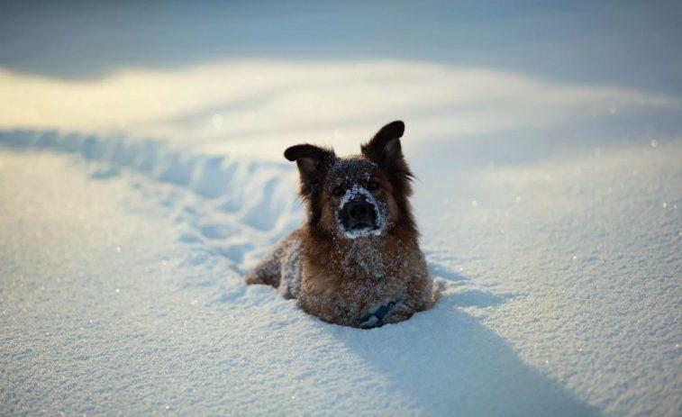 Собачья преданность: тело замерзшего рыбака в течение недели охранял пес