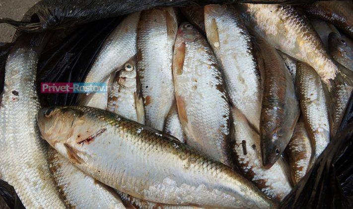 Всего 14 небольших рыб, зато 2 года жизни потеряно