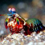 Монстр морских глубин: кто обитает на дне океана?