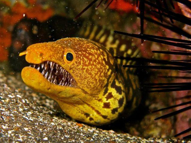 Монстр морских глубин кто обитает на дне океана