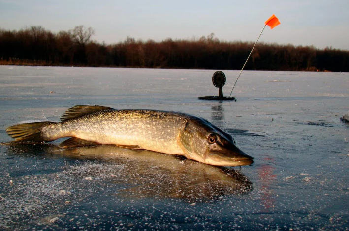 Так губернатор или все-таки браконьер? Чиновник нарушил законы рыбалки