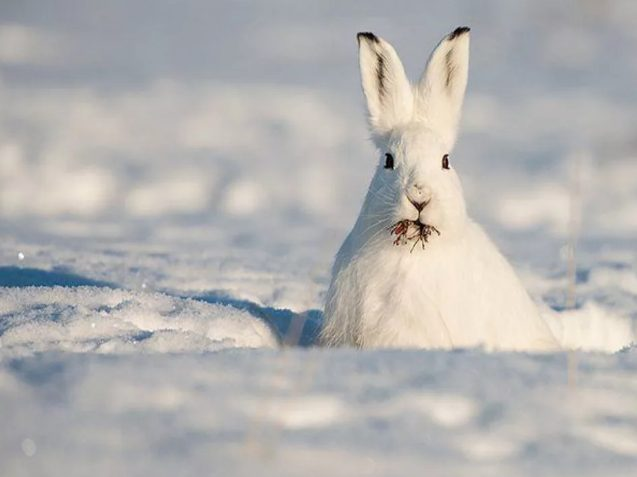 Зимняя охота подошла к концу на территории Подмосковья