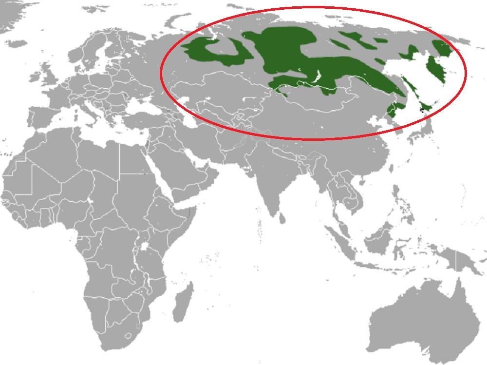 Ареал и места обитания соболя
