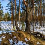 Для охотников и других посетителей на некоторое время закроют лесные зоны