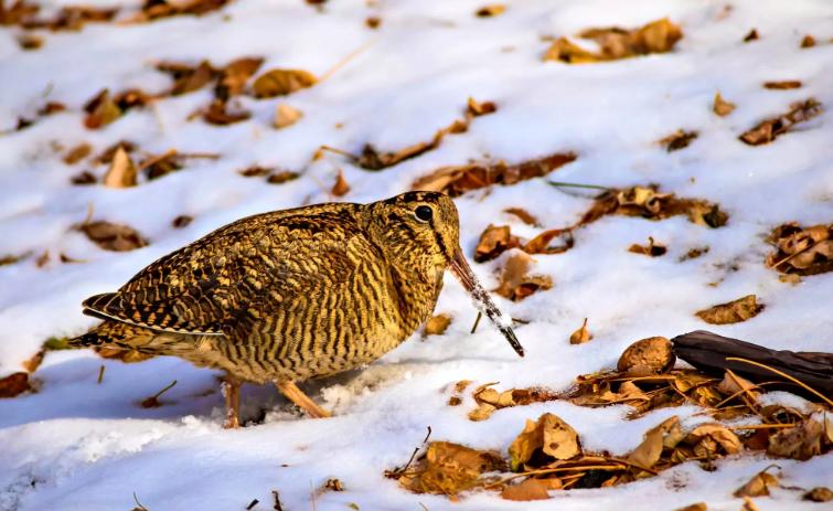 В Пензе охота весеннего сезона начнется немного раньше обычного