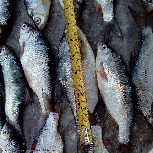 В Краснодарском крае браконьеры порыбачили на сумму более 1 млн