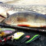 Астраханские рыбаки просят вернуть им рыбалку во время карантина