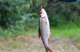 Кубанский пенсионер – рыбак может долго не увидеть свободы из-за рыбалки