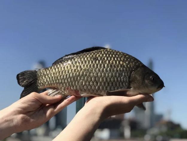 Ловим крупного карася. Немного о привлечении крупной рыбы