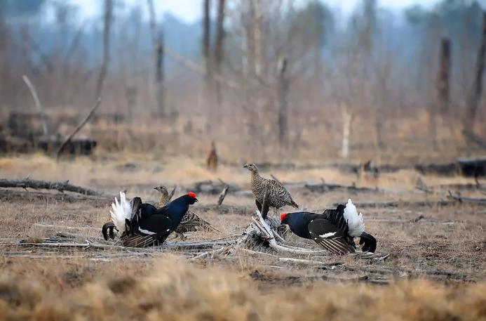 Охота в Челябинске перенесена на неопределенный срок