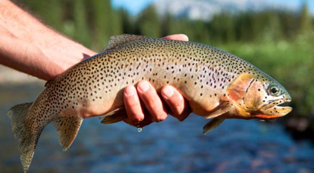 Рыбная ловля в водоемах России