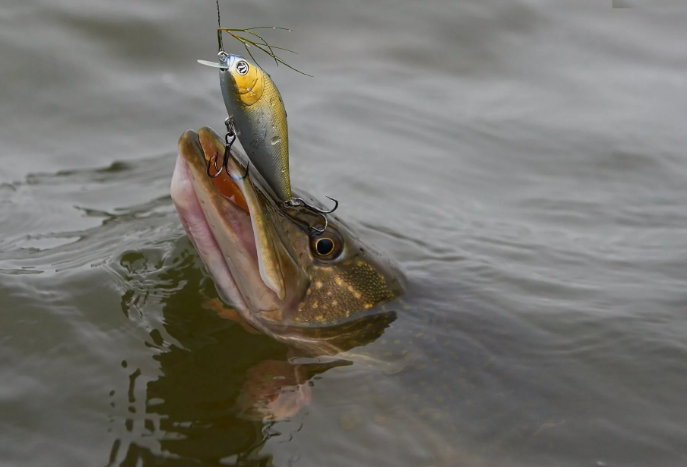 В Орле рыбаку запретили в связи с нерестом