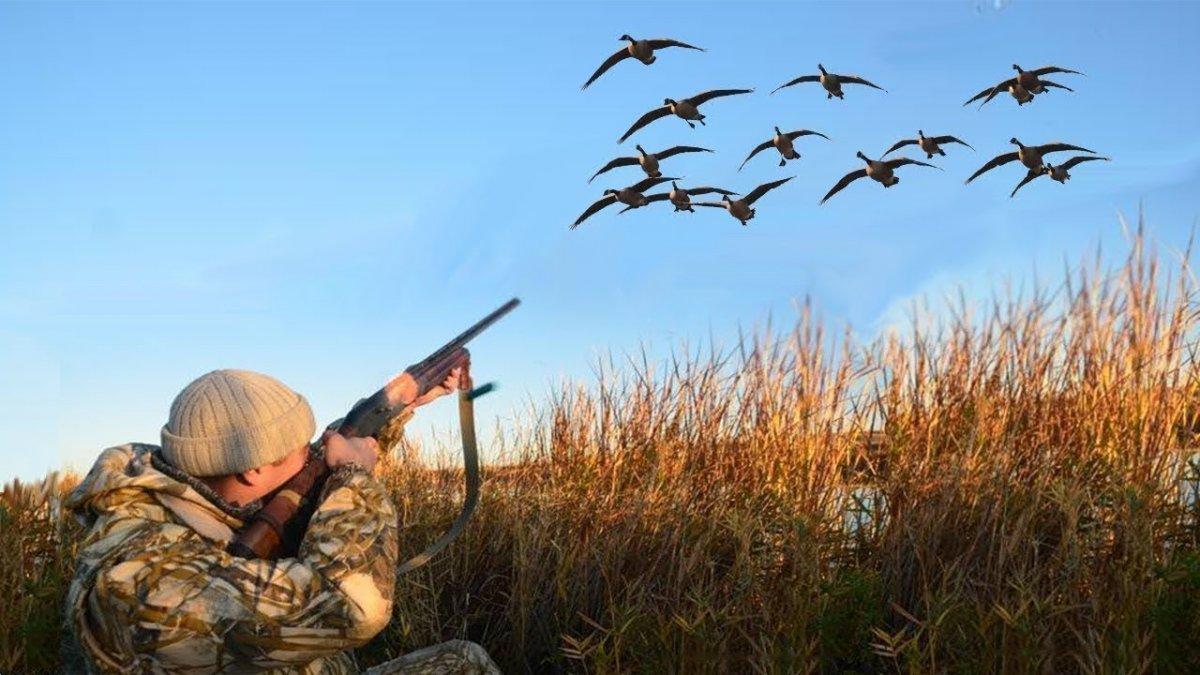 В Магаданской области разрешили охотиться в одиночку